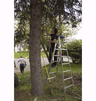 Michael Stopler trims tree