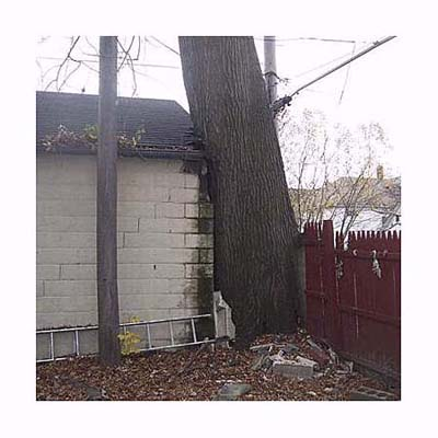 a tree that is supported by the garage