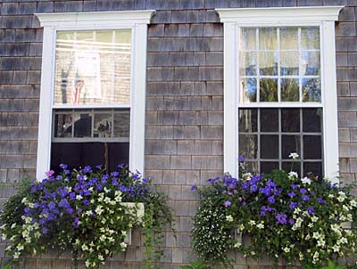 Window Box Design Plants