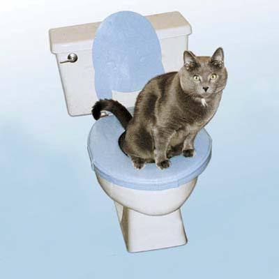 CatSeat by Feline Evolution