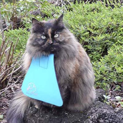 bib with collar designed to keep cats from hunting birds