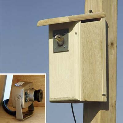 birdhouse with color video recorder