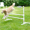 dog jumping over jump bars in yard