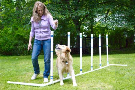 How To Build A Pet Agility Course This Old House