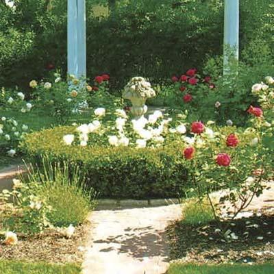 Garden with urn center