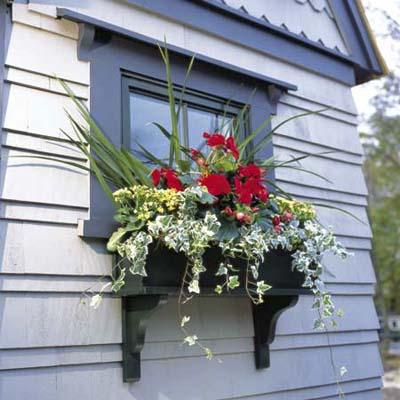 flower box in full bloom installed outside a window