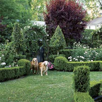 an area with low borders keeps two dogs contained in an area of a garden
