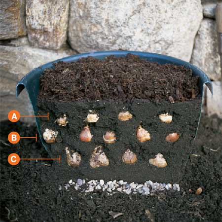 bulbs staggered in container