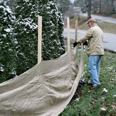 man drawing an erosion-control fabric across a wooden frame to keep road deincing from damaging shrubs