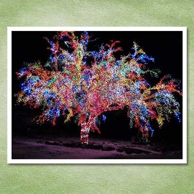 magic crab apple christmas tree