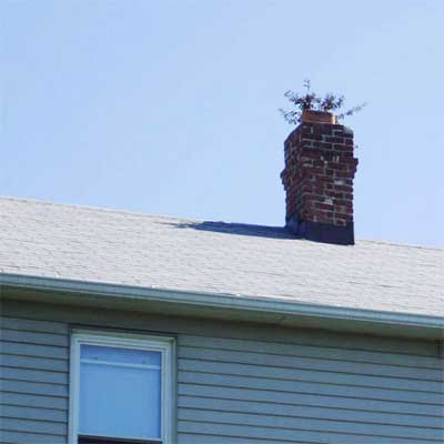 plant or tree growth sticking out of a roof's chimney