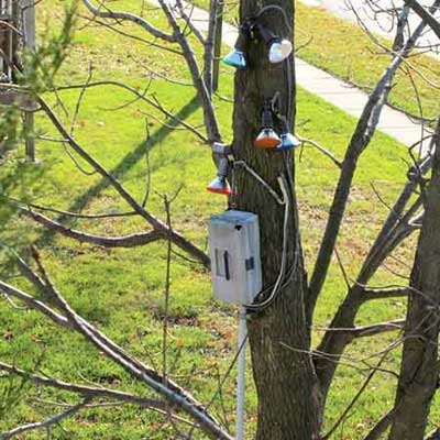 outdoor lighting on a tree with a tackle box used as a circuit panel