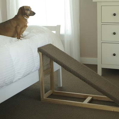 dachshund on bed with carpeted ramp