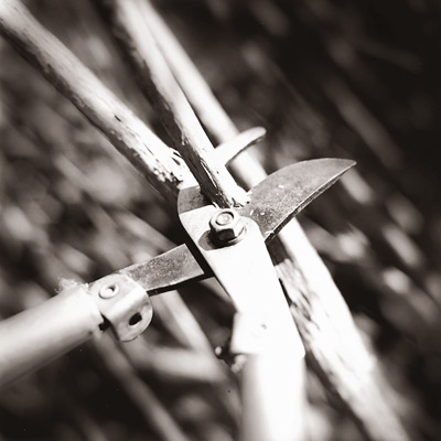 hands and pruner lopping branch