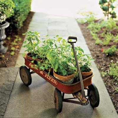 old red wagon holding herb pots
