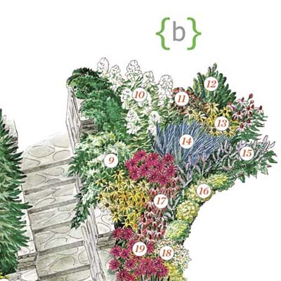 illustration of plants making up this part of the entry garden