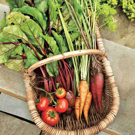 basket of fresh garden vegetables