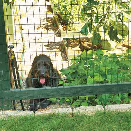 dog looking out of garden fence wall