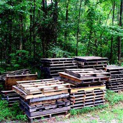 pallets in the forest