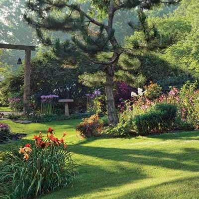 backyard with single Austrian Pine
