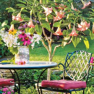 metal patio table with overhead brugmansia on front deck