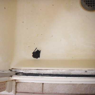Bat in the shower stall