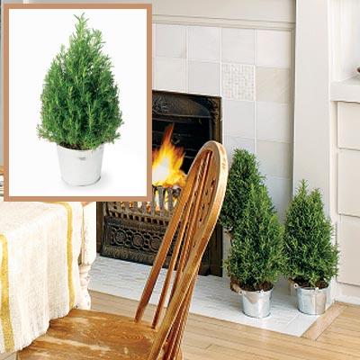 Holiday dining room mini trees