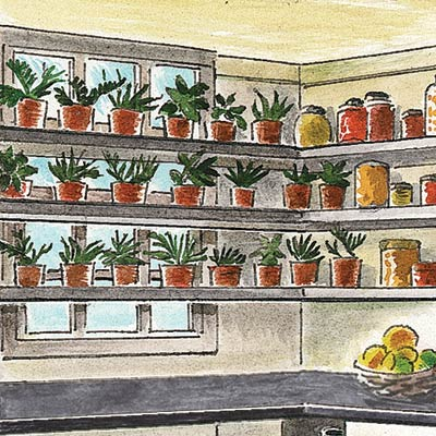 an illustration of open shelving in a kitchen pantry