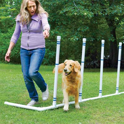 a pet agility course you can build as a pet-friendly project