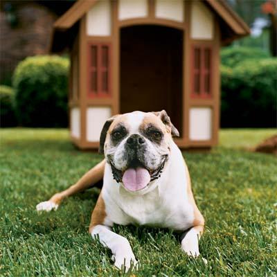 you can build a doghouse like your house as a pet-friendly project