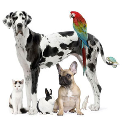 group of pets to make your home pet-friendly for