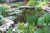 a backyard pond in St. Louis, MO