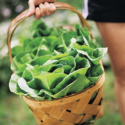 a basket of lettuce