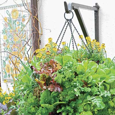 a hanging pot with salad greens