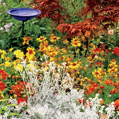 marigolds, asters, zinnias, and dusty miller in late summer