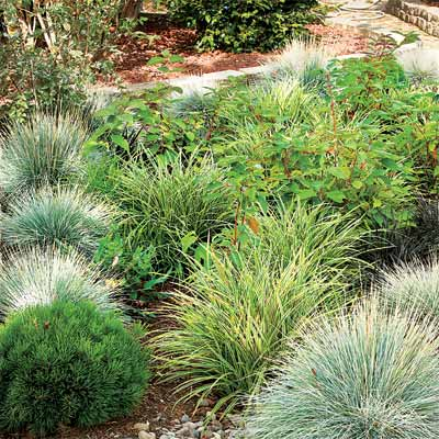 Ornamental Grasses And Shrubs Using Rain Gardens To Keep