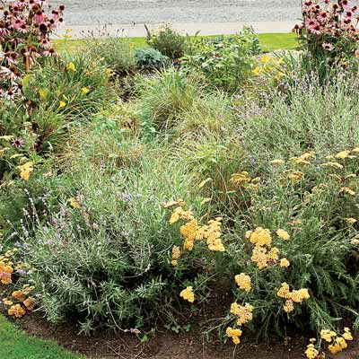 example of rain garden to help you plan