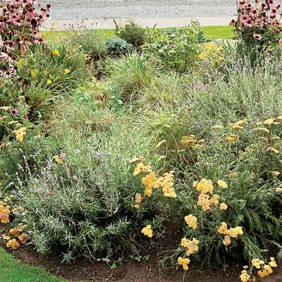 example of rain garden to help you plan