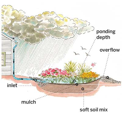 illustration showing how a rain garden works to help you plan