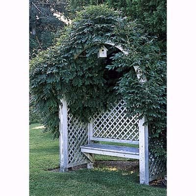 arbor with wisteria and bench in Litchfield, Connecticut, garden