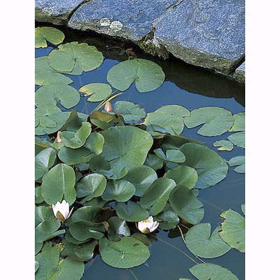 flagstone-edged lily pond in Litchfield, Connecticut, garden