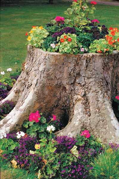Create a Tree-Stump Planter: March's selection from A Year's Worth of Easy Upgrades gallery from this old house