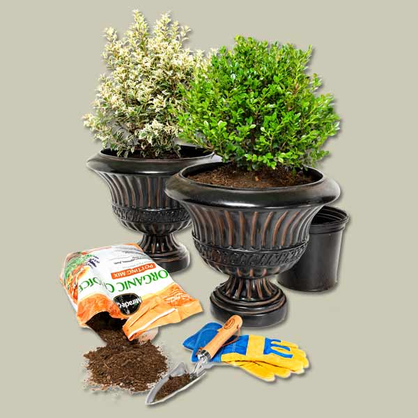 materials for planting evergreens in patio containers