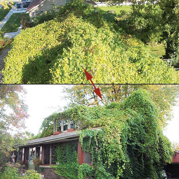 roof and exterior of house totally covered in growth in the this old house Home Inspection Nightmares XXVIII gallery
