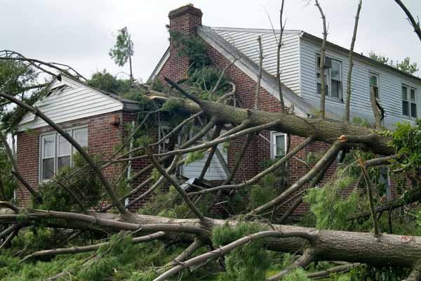 trees fallen on a house from the Dealing with the Aftermath gallery
