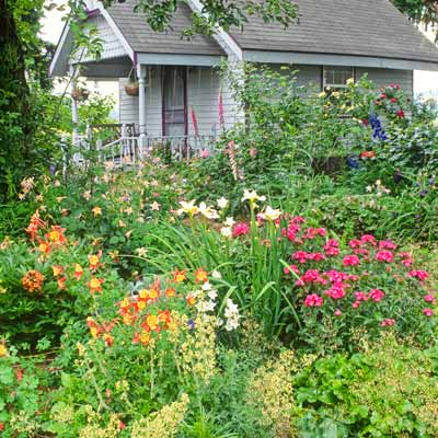 cottage garden of columbine, iris and roses
