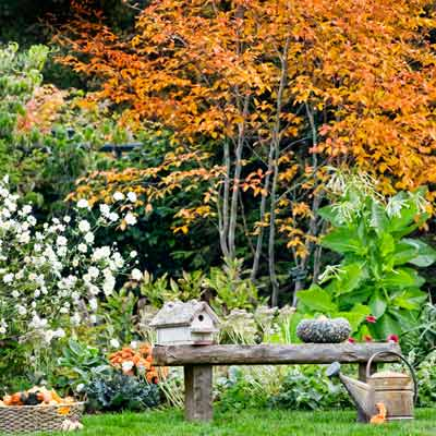 outdoor room with bench in autumn garden