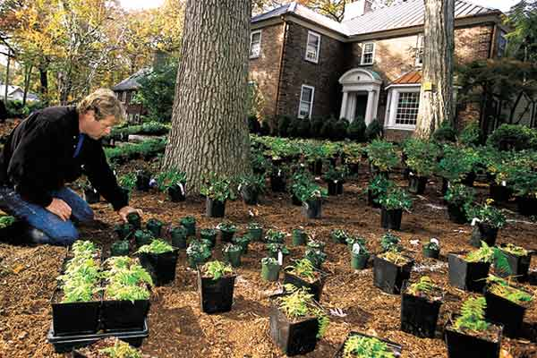 all about ground cover TOH landscape contractor Roger Cook planting ground cover plants