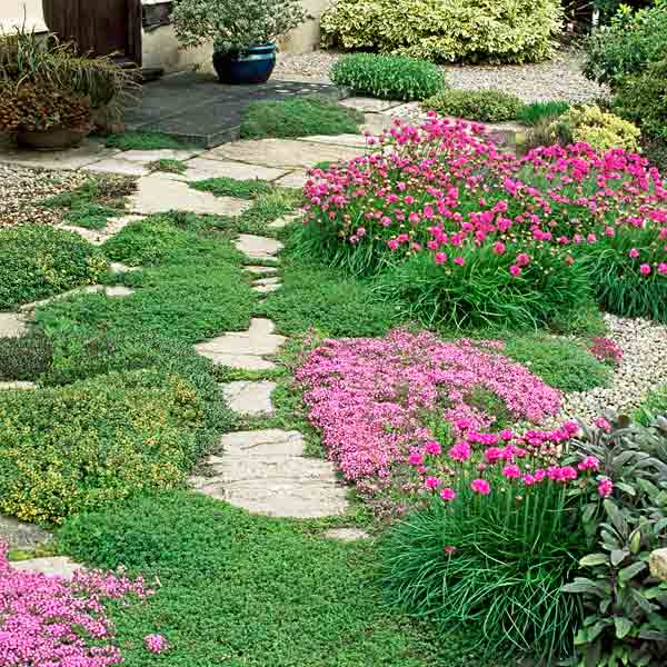 all about groundcover flagstones surrounded by thyme in informal walkway