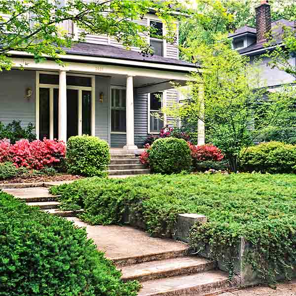 all about groundcover front yard with juniper groundcover
